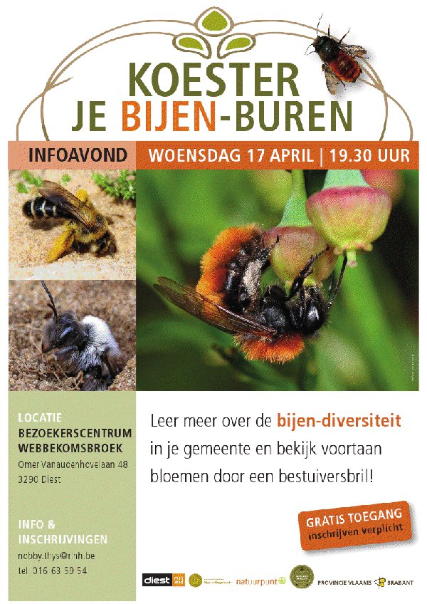 uitnodiging info-avond wilde bijen