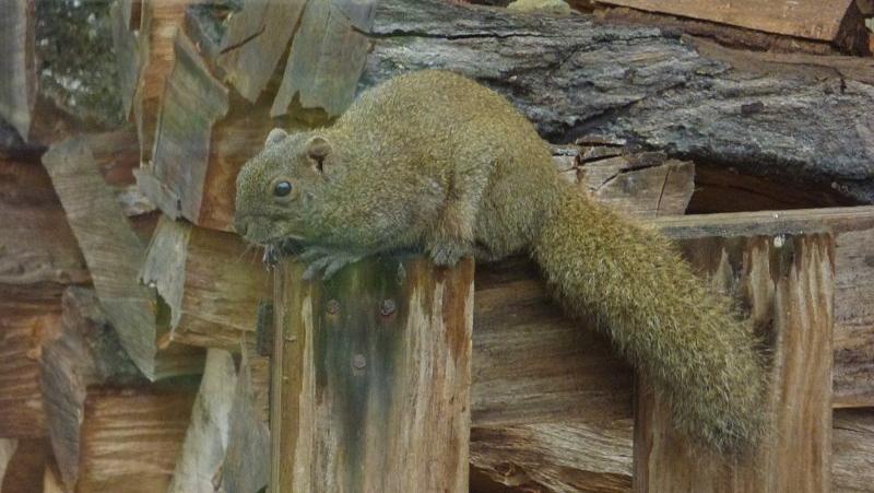 Paniek in eekhoornland